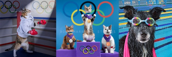 Dogs and cats as London Olympic Medalists